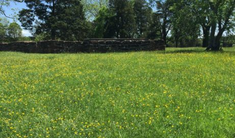 Buttercups and Cannon:  Day 2 – If These Stones Could Talk